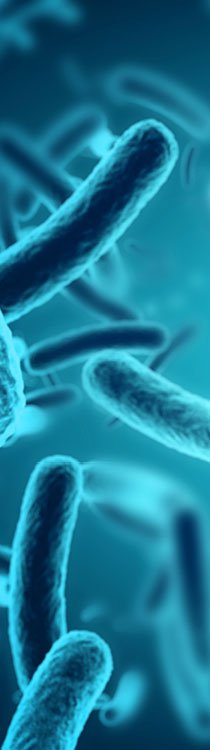 EFD bakterien Anwendungen