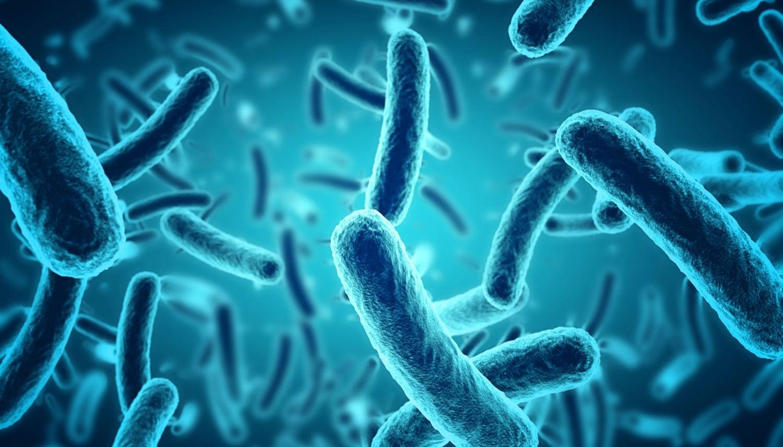 Bakterien header